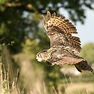 Eagle Owl in Flight by Matthew Walters
