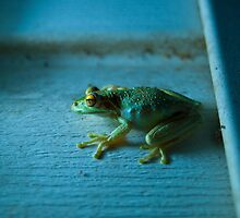 Green Frog by RBuey