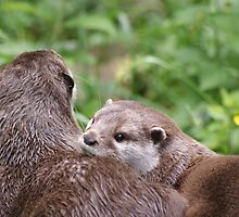 Otter love by Rachelo