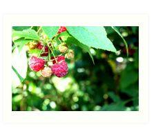 Rasberry Art Print