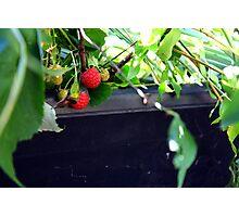 Rasberry Photographic Print