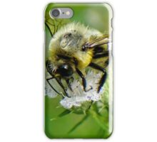 Bumble bee on white flower iPhone Case/Skin