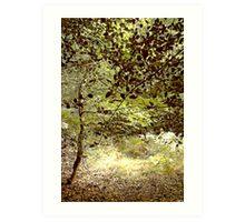 Woods in the Long Grass Art Print