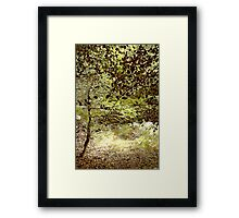 Woods in the Long Grass Framed Print