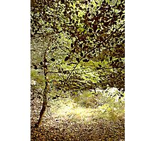 Woods in the Long Grass Photographic Print