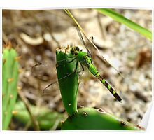 Green on green dragonfly Poster