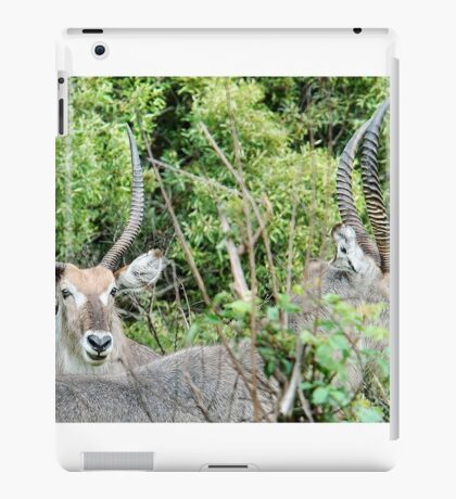 SURVIVAL - THE WATERBUCK - Kobus ellipsiprymnus - WATERBOK iPad Case/Skin