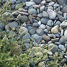 Winthrop Beach Rocks 3 by photosbycoleen