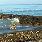 Winthrop Beach Dog by photosbycoleen