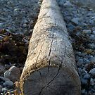 Winthrop Log by photosbycoleen