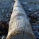Winthrop Log 2 by photosbycoleen