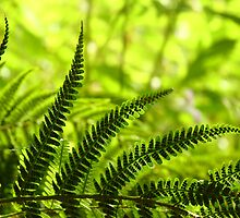 Fabulous Fern by Anne Kingston