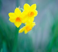 signs of spring... by Natalia Campbell
