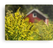 Little Red Shed on the Prairie Metal Print