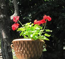 Red Geraniums by Rosie Brown