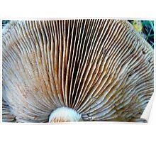 Mushroom Fan Poster