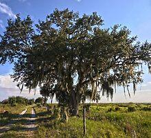 Solo Tree Kissimmee Prairie FL by rowephoto