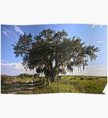 Solo Tree Kissimmee Prairie FL Poster