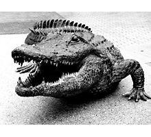 Gator Bait Photographic Print