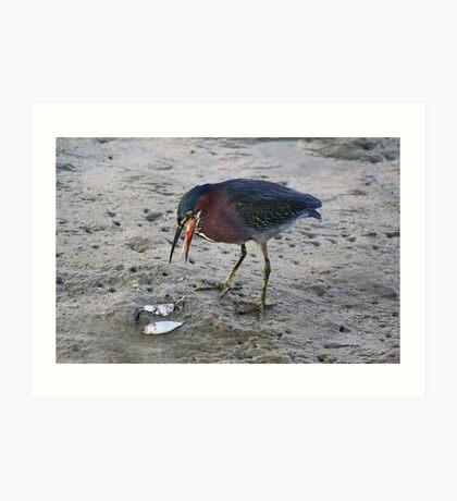Heron Eating Fish Art Print
