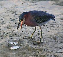 Heron Eating Fish by Paulette1021