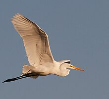 0321104 Great White Egret by Marvin Collins