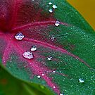 Dew Drops on My Bleeding Heart by Mukesh Srivastava