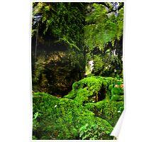 Moss Garden, Carnarvon Gorge. Poster