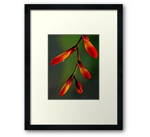 Natures Richness  Framed Print