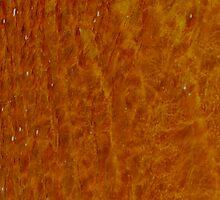 orange by Gary Browne