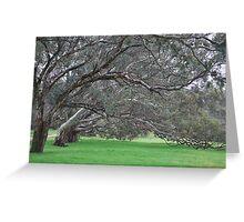 Eucalyptus Trees  Greeting Card