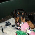Daisy with her toys by Ian Lea