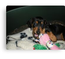 Daisy with her toys Canvas Print