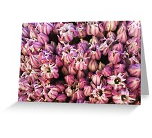 Pink Leek Flower Greeting Card