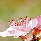 I love spring! by Sangeeta