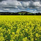 Fields of Happiness by SuzieCheree