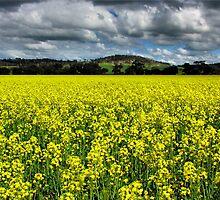 Fields of Happiness by SuzieCheree