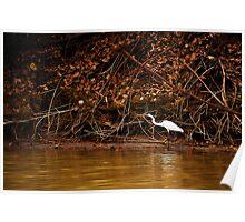 Kakadu  - East Alligator River Waterbird Poster