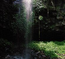 Crystal Shower Falls, Dorrigo NP by Liz Worth