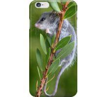Australian Pygmy Possum iPhone Case/Skin