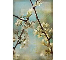 Springtime Blossoms Photographic Print