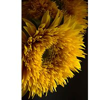 Double Shine Sunflowers - Up Close and Glowing Photographic Print