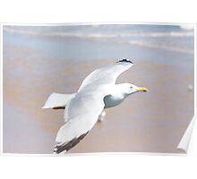 Seagull below Poster
