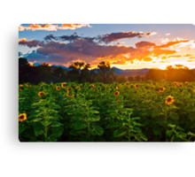Lost In A Sunflower Dusk  Canvas Print