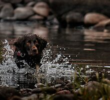 Water Games by by M LaCroix