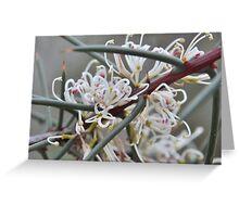 Silky Hakea Greeting Card
