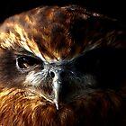 Night Owl by HannahT