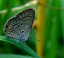 Tiny Butterfly by JYOTIRMOY Portfolio Photographer