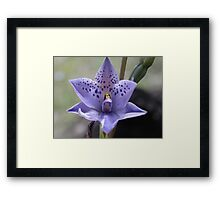 Dotted Sun Orchid Framed Print