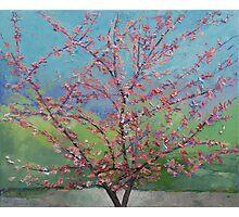 Eastern Redbud Tree Photographic Print